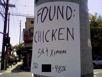 Found_chicken_2